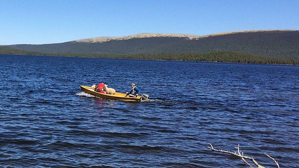 FULL FART: Jan Strypet og sønnen Hågen er på full fart over Savalen mot Svarthue.
