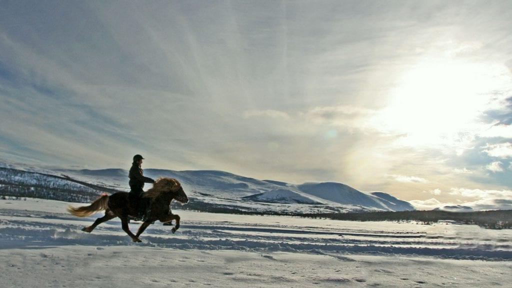Se hestene danse på isen