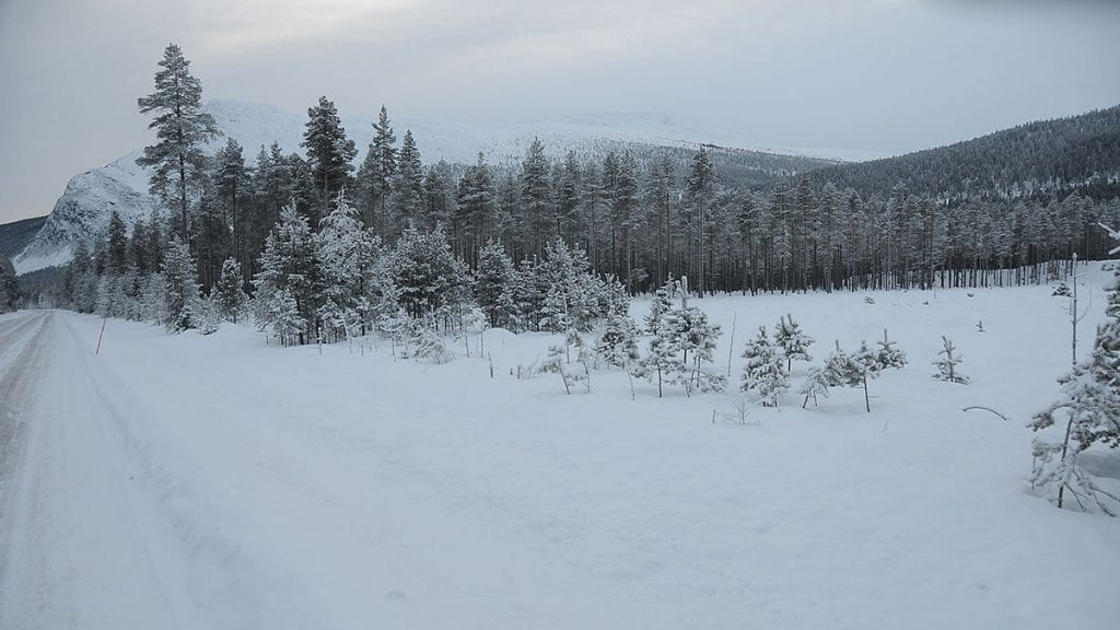 AKTUELT OMRÅDE: Her er området som er aktuelt for datahåndtering i Tylldalen, helt sør i bygda. Foto: Lars Hogstad.